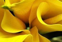 Mellow Yellow / by ✨jOwaNERtribble✨ 'jay'