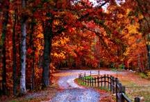 Fall / by Kathy Shay-Shapiro