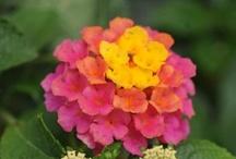 Flowers - Realistic / by Lynn Keniston