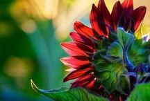 Flower Power / by Destiny Murphy