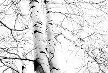 FINLAND / by Adam McKay