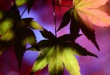 Autumn / by Destiny Murphy