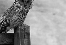 OWL / by Adam McKay