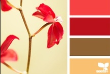 Color Splash / by Holly Helgeson Designs