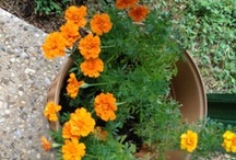 Boomer & Senior Gardening Activities / My senior mom loves to garden and I love to take photos of her garden - plus occasionally dabble with a cute sunflower house or my Mr Lincoln rose bushes. These are all terrific activities to keep boomers and seniors active and more healthy! / by Kaye Swain