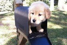 Dog Photos / by PupLife Dog Supplies