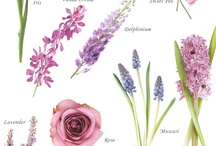 Color: Purple / by Rose of Sharon Floral Designs, Althea Wiles
