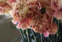 Flower: Carnation / Carnations are beautiful flowers, too. / by Rose of Sharon Floral Designs, Althea Wiles