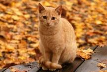 { autumn } / by Avalon Moonsong