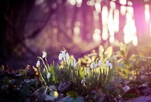 { spring } / by Avalon Moonsong