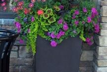 Garden / Garden Ideas / by Christy Sunna
