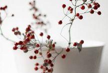 Christmas / by Angela Hofmeister