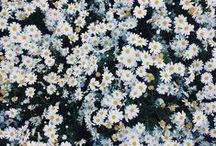 les fleurs. / by Mattie Lippe