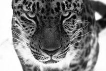 animals...animals...animals...B&W / by Debra Bengs