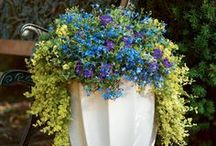 Container Design Ideas by Proven Winners / We love plant containers, window boxes and  vertical gardening! This board will help make your containers the talk of the town!  Let your imagination set you free.  / by Proven Winners Plants