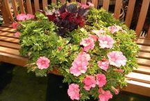 Gardening Tips by Proven Winners / Whether a new or a seasoned gardener, we all need some assistance in maintaining a garden and containers.  These pins will help you plant, prune, fertilize, water, and overwinter plants.  / by Proven Winners Plants