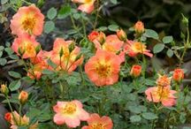 Top 10: Favorite Plants from Proven Winners / So many plants, so little time!! How do you pick your garden plants?  Meet Proven Winners staff members and check out their suggestions.    / by Proven Winners Plants