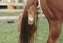 Horse Love / by Teresa Bostian
