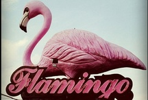 pink flamingos / by Miss Happ