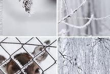 winter ♡ / by Jasmijn Amelie Wind