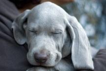 I love this dog ♡ / by Jasmijn Amelie Wind