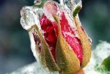 Winter's Garden / by Didi Dreams...