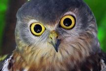 Owls / by Jeanne Caras