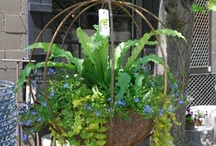 Garden/outdoors / by Penny Allgood