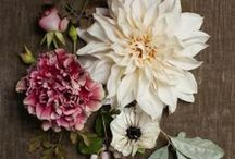 F L O W E R S / Floral artistry. / by Lauren Krysti Photography