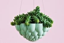 plants / by artnau