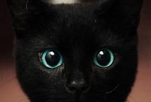 CAT! / by Jill Blackwood
