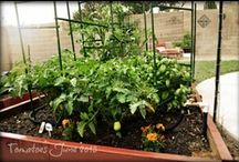 garden / by CAW Designs
