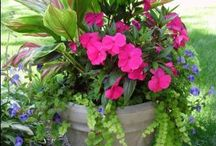 gardening / Plants and containers / by Kim Forman