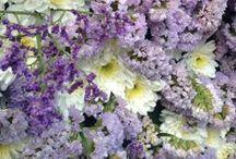 Chelsea in Bloom 2014 / #NaturallyBlooming / by Liz Earle