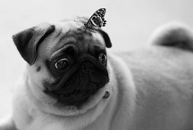 Pugs! ~and some other critters~ / by Aubrey Phillips
