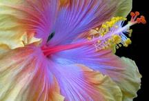 Flowers / by Jesu Reitze