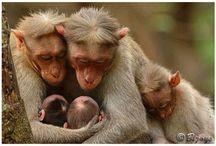 Animals & Animal Families / by Lynne Scott