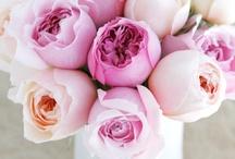 floral love / by Pamela Carrasco