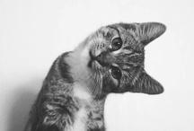 Cute Critters / by Bonnie Burroughs