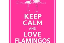 Flamingos!!! / by Patti Vincent