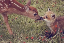 I'm foxie and quite a deer. / Simple. Deer. Fox. <3. / by Ashleylynn