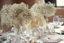 Stunning: Baby's Breath / A collection of everything baby's breath. / by André Winfrye Events