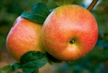 An Apple A Day / Illinois farmers grow healthy apples for your family and theirs. Check out this board for delicious recipes and fun facts!  / by Illinois Farm Bureau