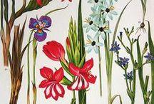 botanical  (long term trend) / by patricia de miranda