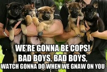 Police Officers & K9 Unit! / by Mary Bodmann