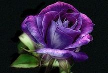 Everything Purple / I  can't get enough PURPLE in my life!!  / by Marci Brown-Pfeiffer