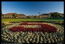 Cardinal Pride  / How lucky are we to have the Stanford University Tree? / by Four Seasons Hotel Silicon Valley at East Palo Alto