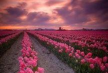 Flowers / by Hanaki Hickenbottom