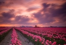 Natures Beauty / by Hanaki Hickenbottom