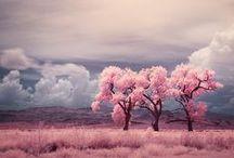 amazing color  / by Hanaki Hickenbottom